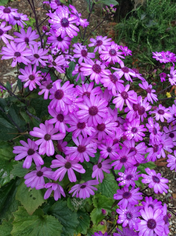 The amazing healing properties of flowers